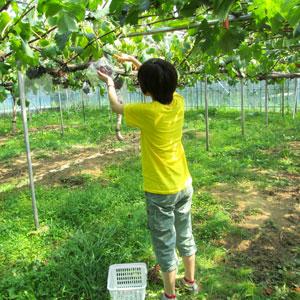 収穫体験の写真